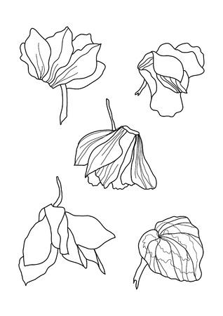 cyclamen: cyclamens pen drawing collection