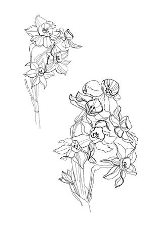 Iris flowers drawing on white background Illustration