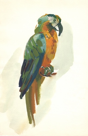 scetch: watercolor parrot sketch Stock Photo