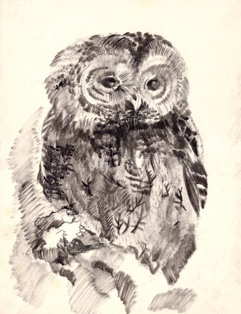 old pencil: owl brush drawing sketch
