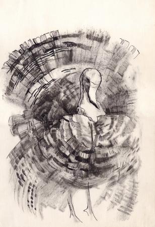 gobbler: turkey dry brush drawing sketch Stock Photo