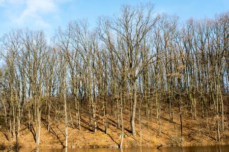 Oak Grove on the shore of the lake, late autumn. Stock fotó