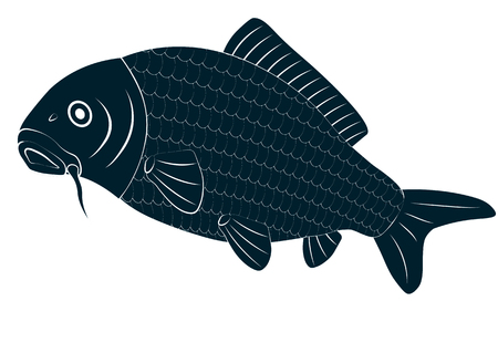Vector drawing carp fish