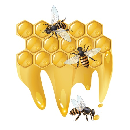 Three bees and honeycombs isolated on white