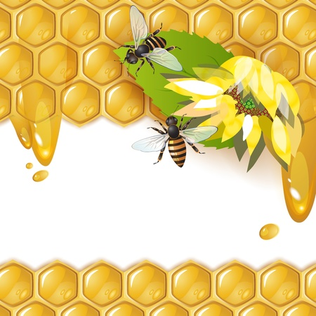 honey bee: Background with bees, sunflower and honeycomb
