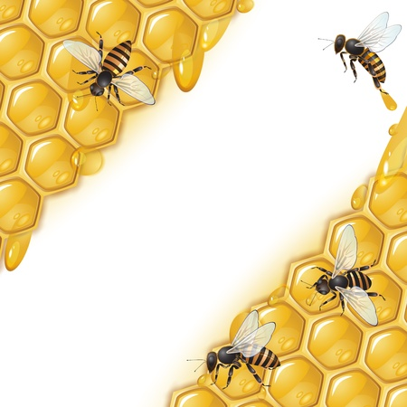 honey cell: Background with bees and honeycomb