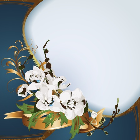 white orchids: White orchids on blue background