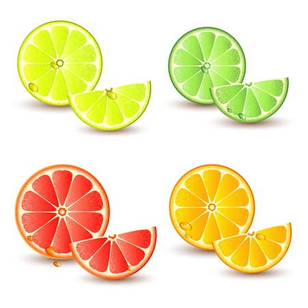 lime slice: Set of citrus fruit - lemon, orange, grapefruit and lime