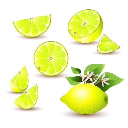 Fresh lemon with flowers, leaves and lemon silice Stock Vector - 13302259