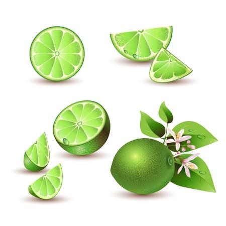 lemon lime: Calce fresca con fiori, foglie e fette di calce