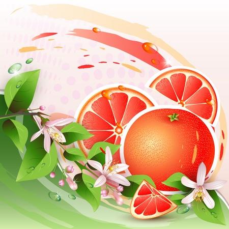 pomelo: Resumen de antecedentes con pomelo fresco, las flores y las rebanadas de toronja