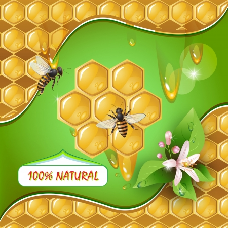 Background with bees, honeycomb and flower  Vector