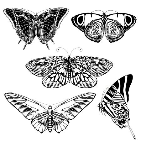 Set of monochrome butterflies  Vector
