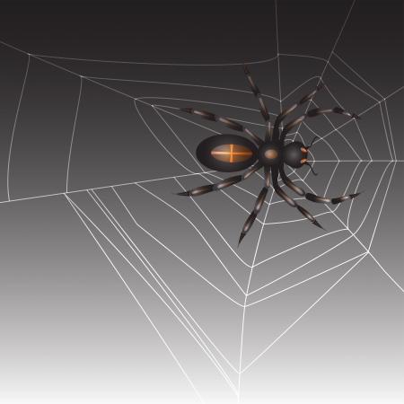 spidery: Spider on dark background  Illustration