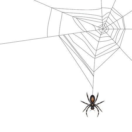 spidery: Spider isolated on white background  Illustration