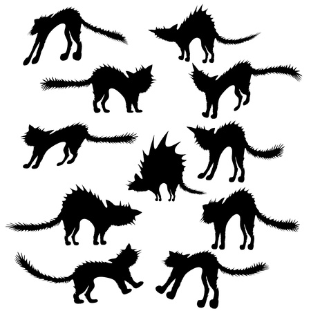 Cats silhouettes on white background
