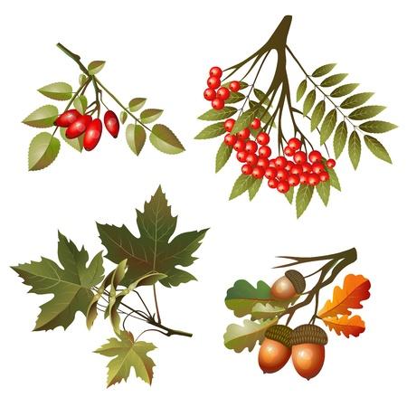 Colección otoño hojas y frutas aisladas sobre fondo blanco