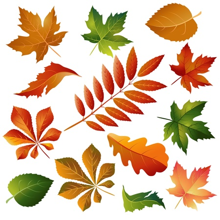 elm: Collection beautiful colorful autumn leaves isolated on white background Illustration