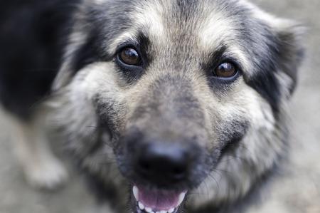 vagabond: Close up dog face Stock Photo