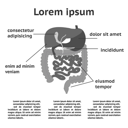 descending colon: The human digestive system illustration with space for text