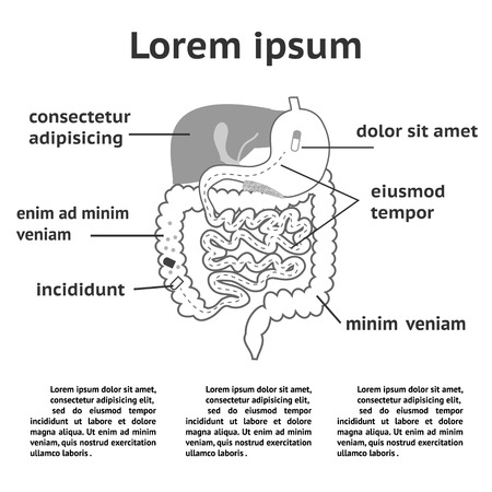 splitting: The human digestive system, illustration of splitting pills Illustration
