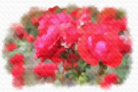 transparently: Red rose. Watercolor illustration