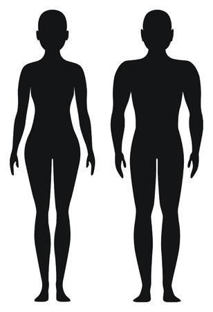 body shape: Forme proporzionale di uomini e donne Vettoriali