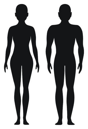 Proportional shapes of men and women