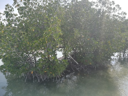 close up mangrove 版權商用圖片 - 124717046