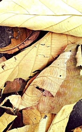 hojas secas: Gran fondo de hojas secas