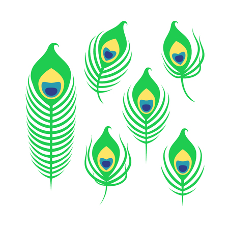 Set of peacock feathers isolated on white background. Art vector illustration