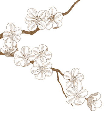 Hand drawn branch of plums blossom isolated on white background Illustration