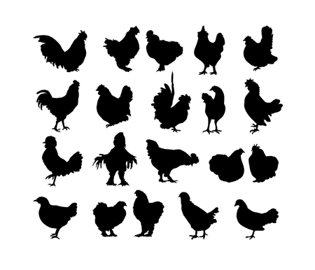 Big collection of cock and hen s black silhouettes isolated on white background. Set of roosters - symbol of chinese New Year 2017. Different breeds of chickens. Illustration