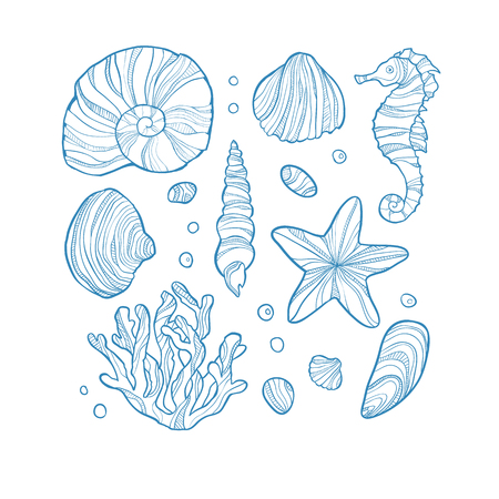 cockleshell: Set seashell, coral, seahorse, starfish and rocks isolated on white background. Hand drawn style. Art vector illustration.