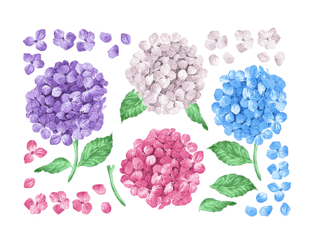 Set collection of Lilac hydrangea flowers, leaves, petals isolated on white background. Watercolor style. Editable elements. Botanical vector illustration. Illustration