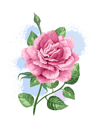 Rink rose on stem in watercolor style and splashes isolated on white background.  イラスト・ベクター素材