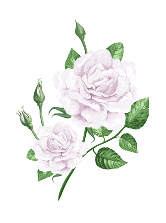 White rose on stem in watercolor style and splashes isolated on white background.