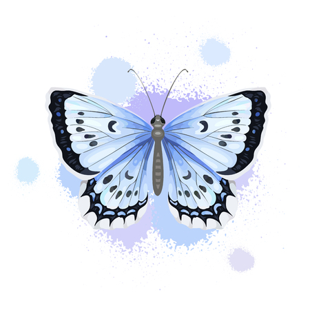 Realistic butterfly isolated on white background.