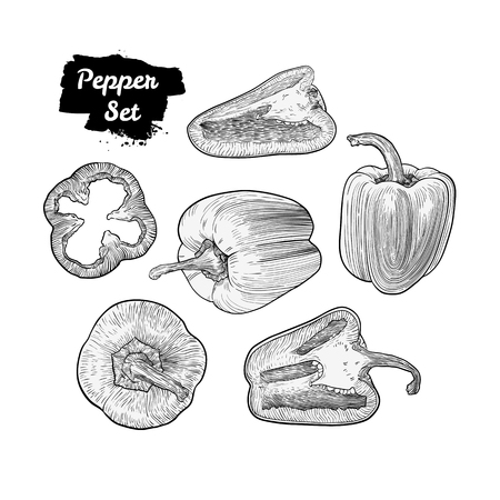 Hand drawn sketch style bell pepper set isolated on white background. Ripe and sliced peppers. Engraved style capsicums. Healthy fresh eco food. Art vector illustration.