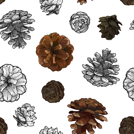 Pine cones seamless pattern isolated on white bacground. Art vector illustration
