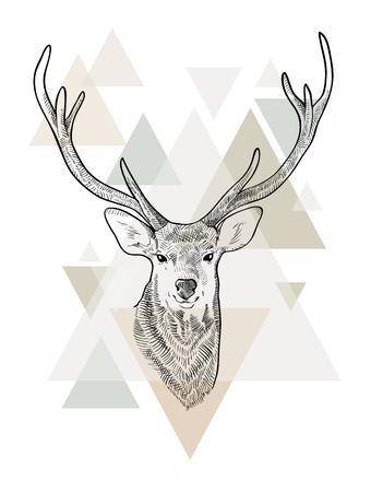 Hand drawn head of deer. Scandinavian style