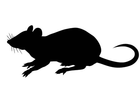 Silhouette of the rat isolated on white background.
