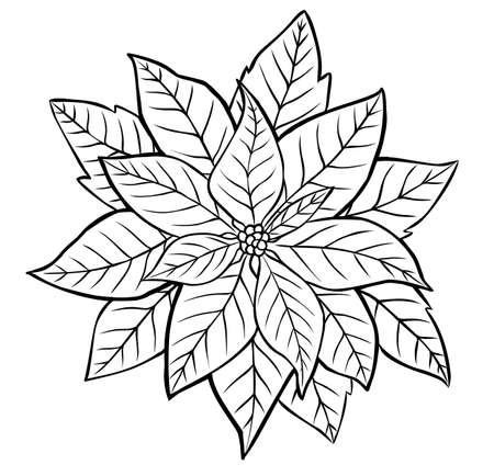 Poinsettia Flower. Contour image isolated on white background.  イラスト・ベクター素材