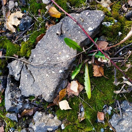 Small stones, autumn foliage and a piece of concrete lie on green moss. Autumn forest background. Stok Fotoğraf