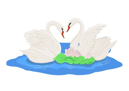 swimming bird: two white swans on the water Illustration
