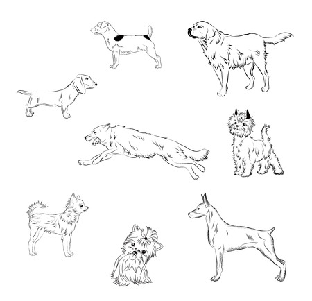 black and white vector illustration of different breeds of dogs Illustration