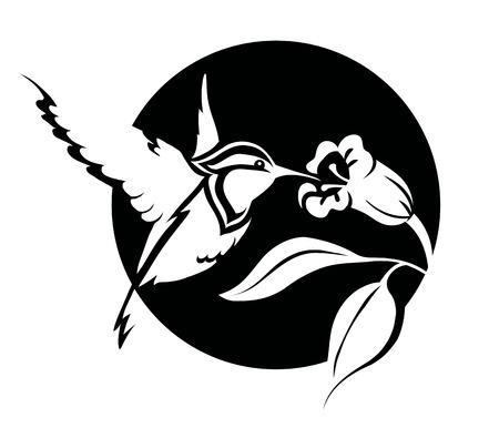 bandada pajaros: Ilustración en blanco y negro de un colibrí con una flor