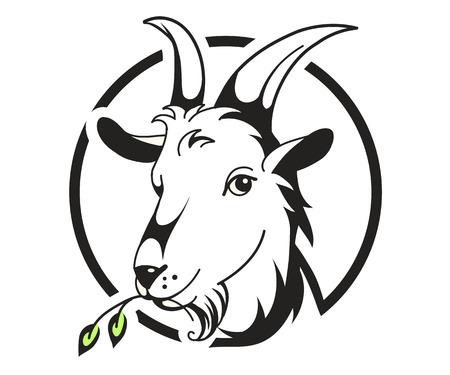 cabra: Jefe de la cabra en el fondo blanco, ilustración vectorial