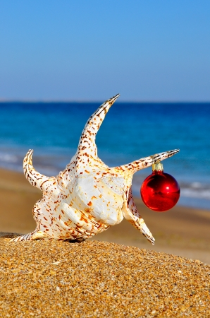 Christmas seashell on the sandy beach photo