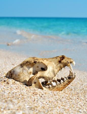 animal parts: Dog skull on the beach against blue sky